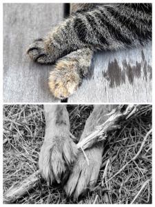 Le B.A.R.F pour chiens et chats